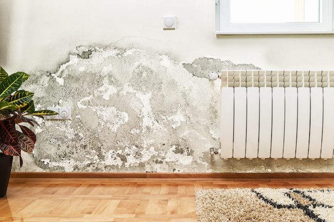 3 Common Signs of Mold Growing in Your Home