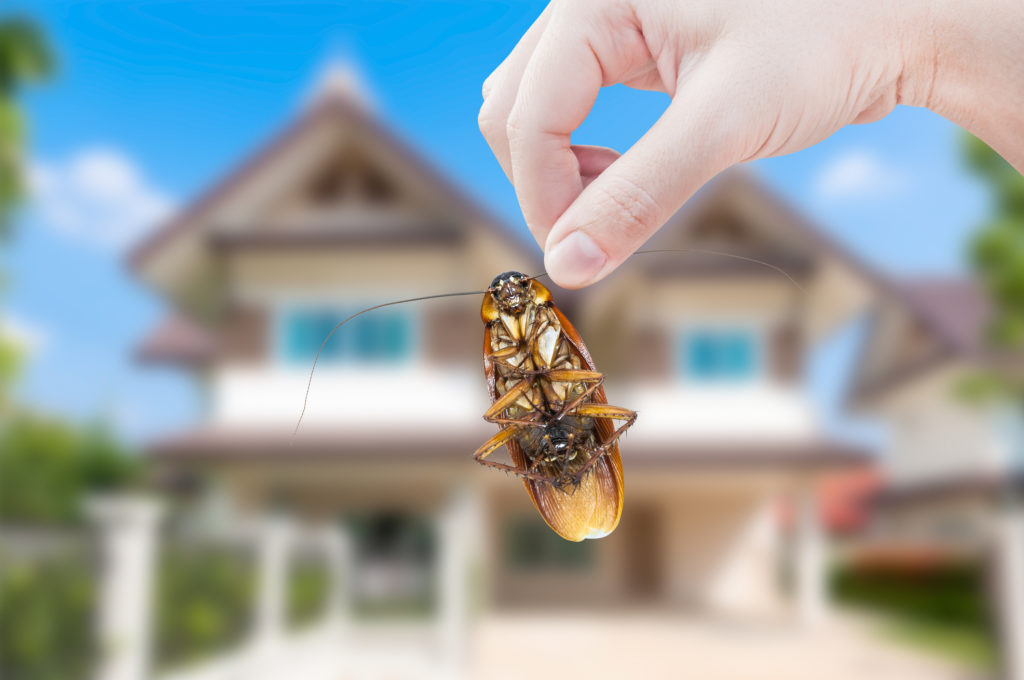The Top 3 Household Pests